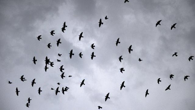 Miljoenen vogels vliegen op door vuurwerk tijdens jaarwisseling | NU - Het laatste nieuws het eerst op NU.nl