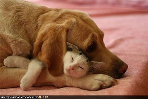 Best buds: True Friends, Best Friends, Bestfriends, Pet, Close Friends, Dogs Cat, Cuddling Buddy, So Sweet, Sweet Dreams