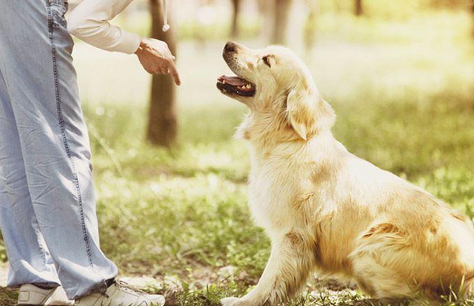 Grâce à ces 5 bases indispensables pour éduquer son chien, vous serez plus près du succès ! ICI ==> http://www.yummypets.com/wellbeing/article/53920-comment-eduquer-son-chien-5-bases-indispensables
