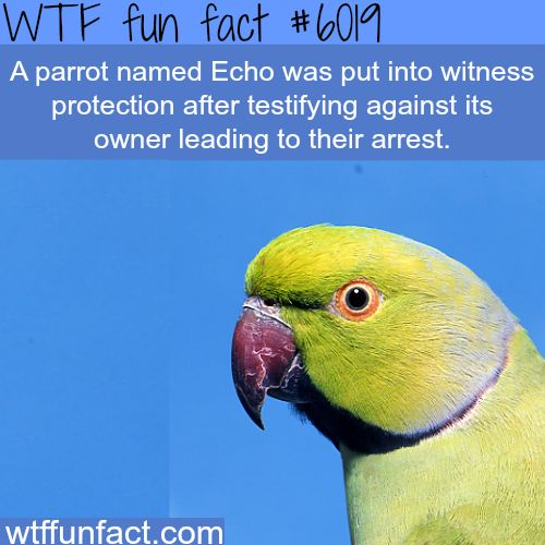 Echo the parrot - WTF fun facts #parrothumor