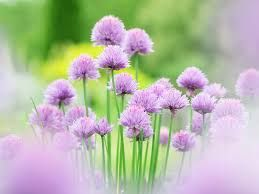 Resultado de imagen para imagenes de flores hermosas con sus nombres
