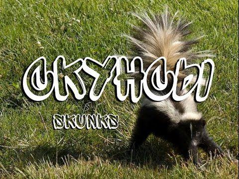 Скунсы — Skunks