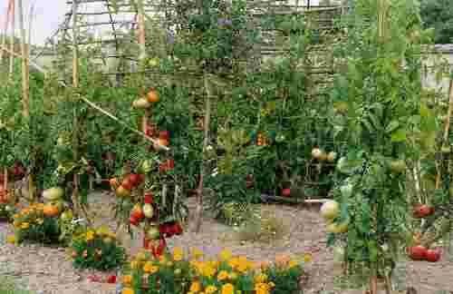 Comment créer son premier jardin potager en 7 points | Potager, conseil de jardinage, jardiner avec la Lune | blog HORTIK
