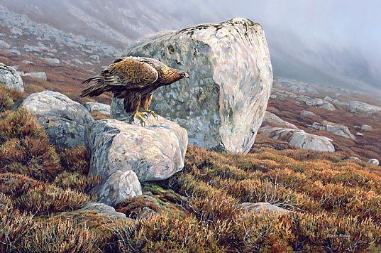 Wildlife Wildlife Paintings Artist Martin Ridley Wall Art