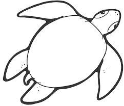 Resultado de imagen para imagenes y dibujos de tortugas para imprimir