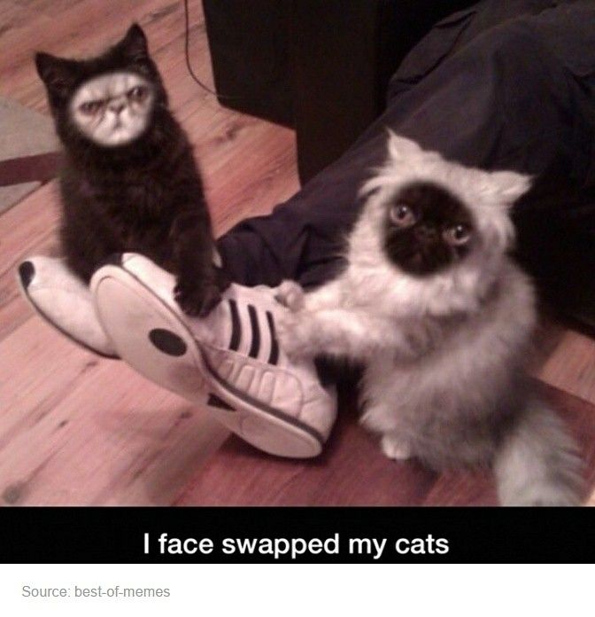 We live in a #trulyamazing age of #technology.  #cats #faceswap #blackcat #longhair #persian #meme #snapcat #peopleorganizedunderthenewcatempire #pounce #shortface #adidas