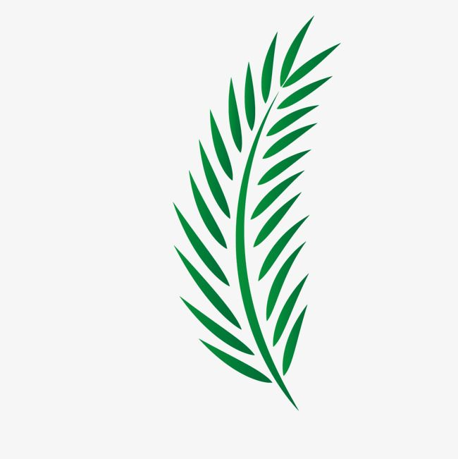 Palm Leaves Vector Palm Leaves Green Vector Palm Christ