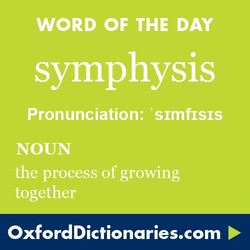 symphysis (noun): The process of growing together. Word of the Day for 22 May 2016. #WOTD #WordoftheDay #symphysis