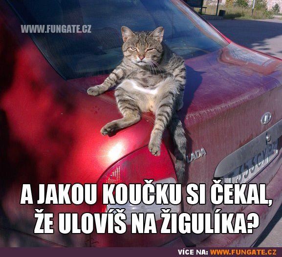 A jakou kočku si čekal, že…