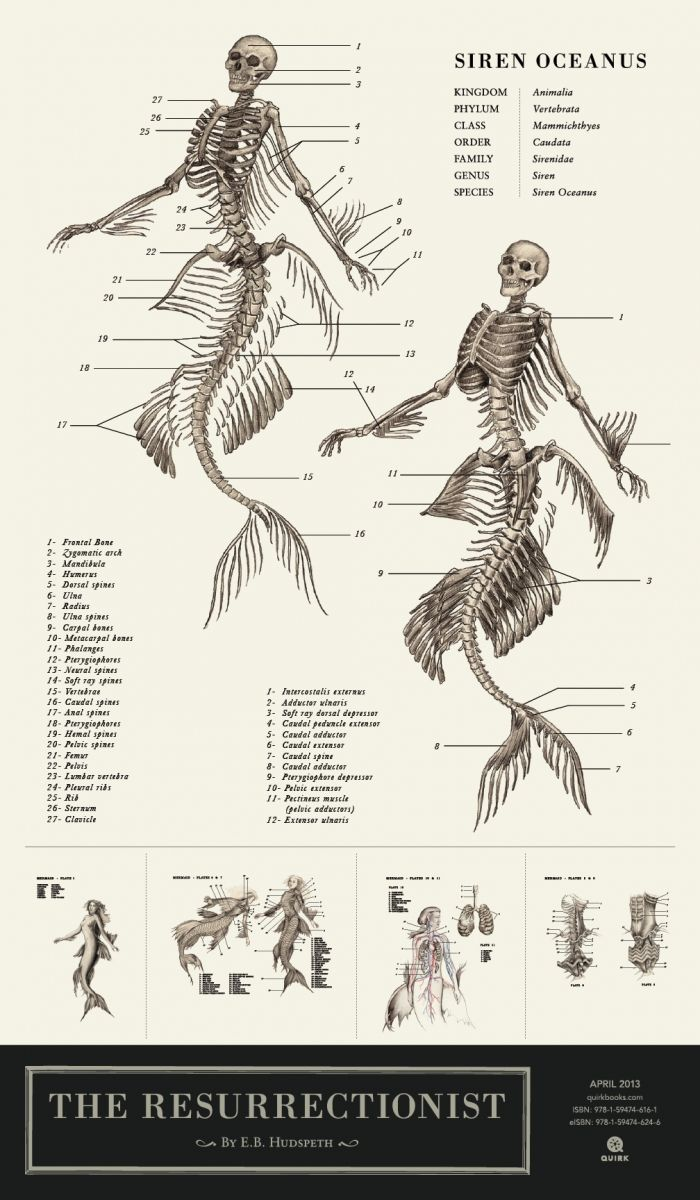 87 besten SCUBA DIVING (+UNDER SEA) Bilder auf Pinterest | Armreif ...