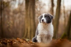 Dog Desktop Images, Animal Background Images, Download Dog Wallpapers, Free Images, Pets, Dog Claws, Dog Eye, Amazing Animal Wallpapers, 1680×1050