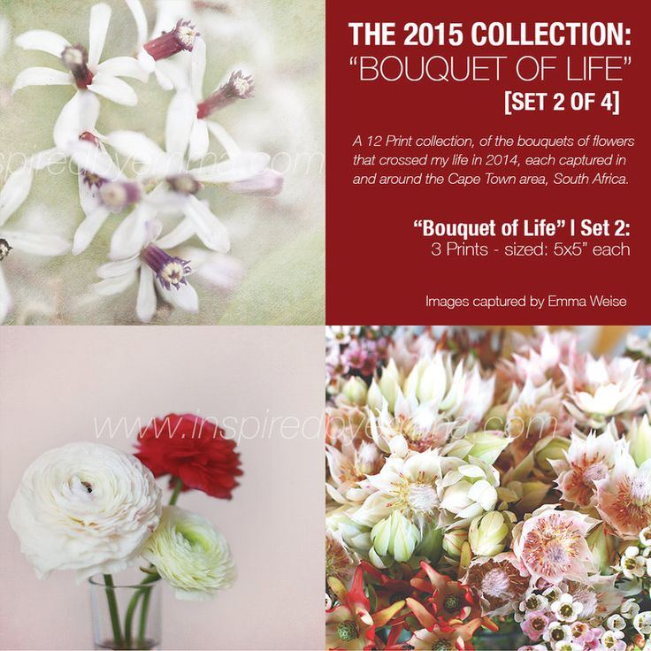 """2015 Collection 