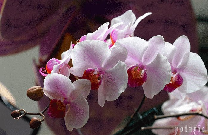 того, с днем рождения картинки с орхидеями армии может пригодиться