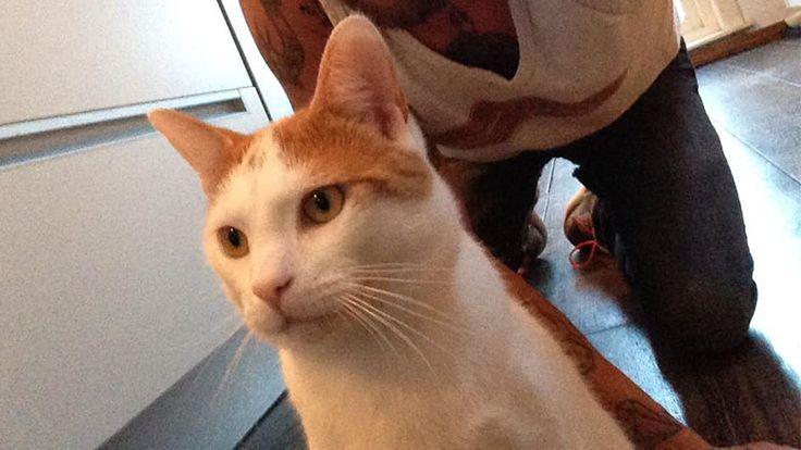 NH | Dierenbeul rijdt kat aan en trapt hem in sloot