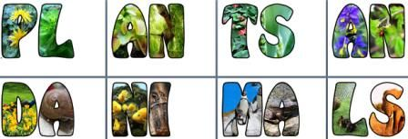 "Cool letters for ""Plants and Animals"" and ""Habitats and Food Chains"""