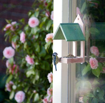 Tip voor vogelvoer in de tuin