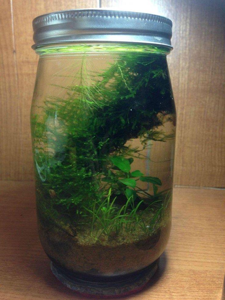 LIST: low tech, mini, nano, pico planted tanks: --- 50+