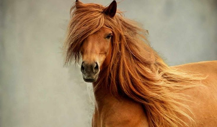 16photographs showing the beauty ofhorses