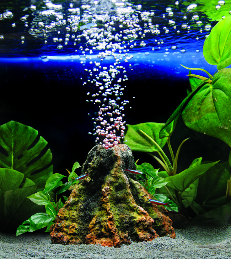 2344 best images about tank ideas on pinterest crested for Fish tank volcano
