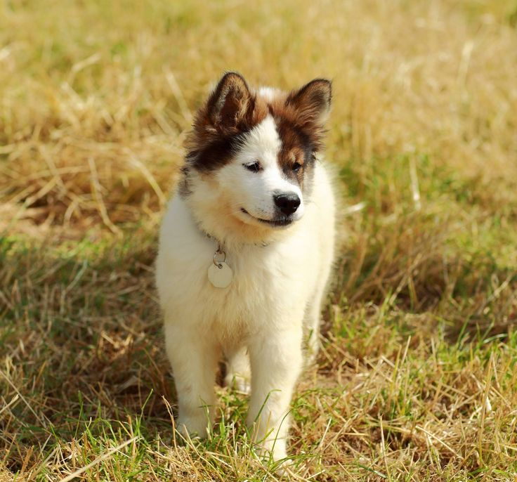 What S The Best Medium Breed Dog For A Kid Pet
