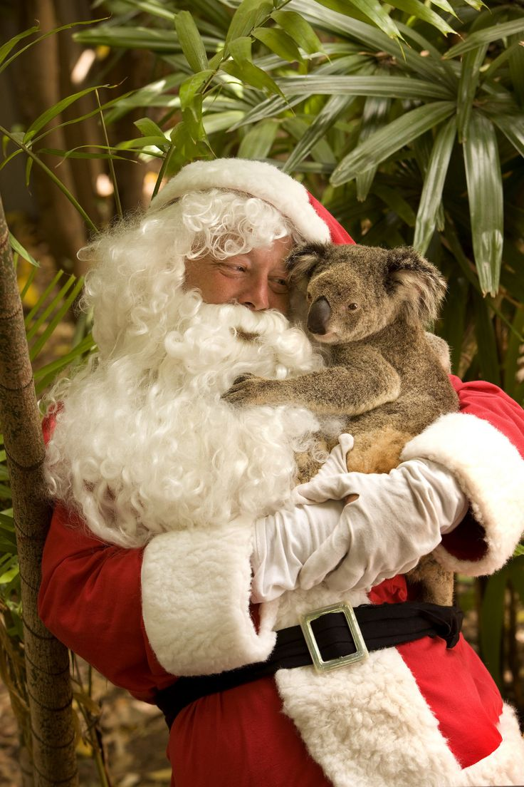 "Australia is having their Summer when Christmas arrives. Folklore has it that Santa, after changing into lighter clothes, delivers presents downunder using six white kangaroos, called ""boomers"" instead of reindeer! Also, Santa gives hugs to koalas!"