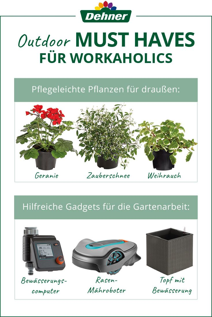 Unsere Must Haves Fur Workaholics Gartenarbeit Pflegeleichte Pflanzen Garten