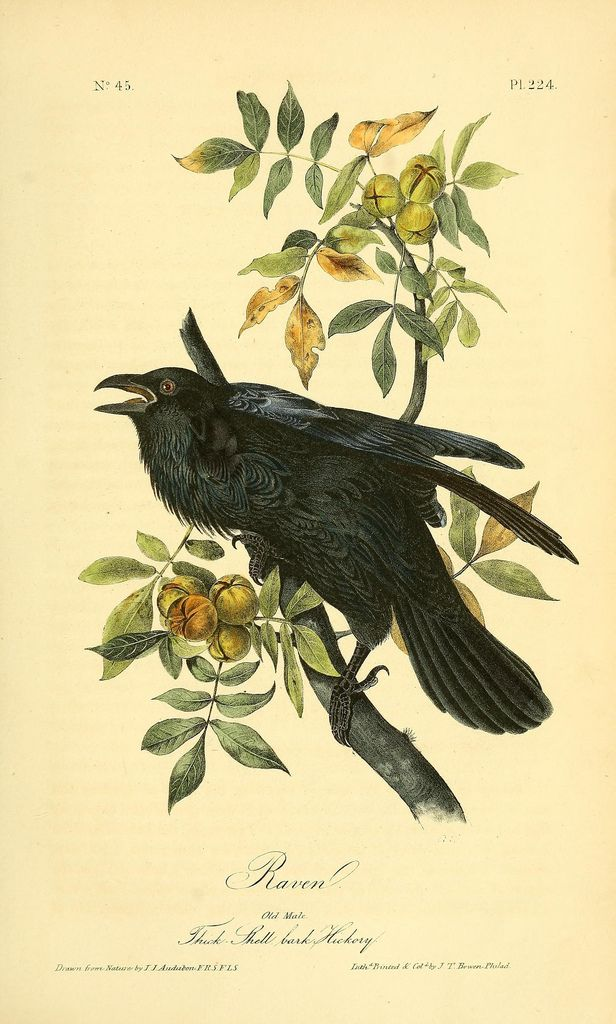https://www.flickr.com/photos/biodivlibrary/8576528757/sizes/l