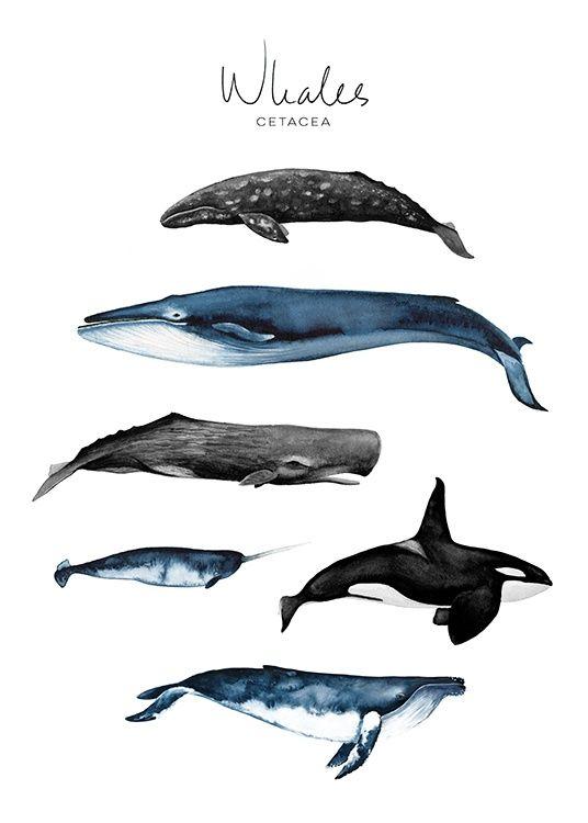 Whales Poster in der Gruppe Poster / Größen und Formate / 50x70cm bei Desenio … – chiquitajana