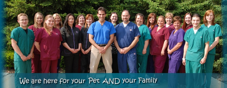 13++ Crest hill animal hospital ideas in 2021
