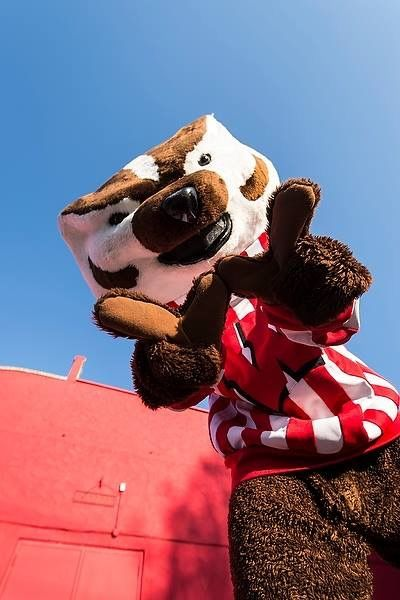 Bucky! Wisconsin Badgers #Badgers #OnWisconsin #UW [Follow WisconsinHouses for more local pins]