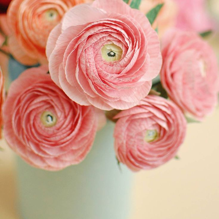 I'm in love with pink and ranunculus... #paperflowers #paperflowersart #paperranunculus #crepepaperflowers