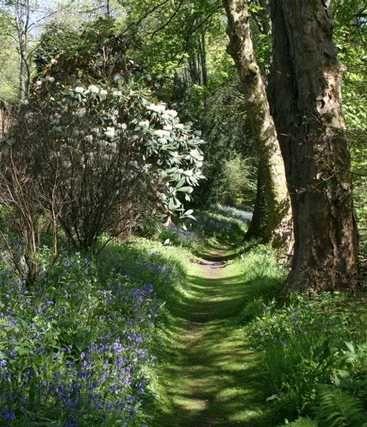 Vous avez un jardin à l'ombre et ne savez pas quelles plantes peuvent s'y épanouir ? Suivez nos conseils pour embellir tous les coins ombragés de votre jardin ou de votre terrasse. Contrairement à ce que l'on pourrait croire, de nombreuses plantes se plaisent dans les situations ombragées ou mi-ombragées. , par Audrey