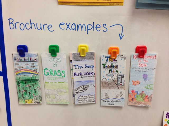 Little Lovely Leaders: Ecosystems Brochure Project -- Love this as a way to display exemplars! One area I really need to work on is keeping samples of outstanding work to show as exemplars for the next time I use that lesson.