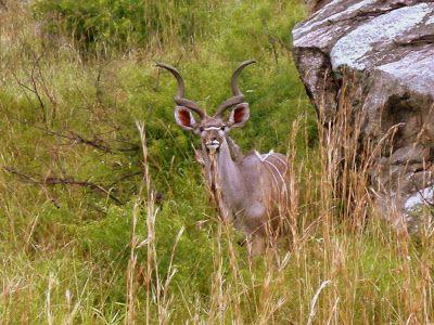 Kruger National Park Calendar - September   #southafrica #kruger #safari #weather #wildlife #knp