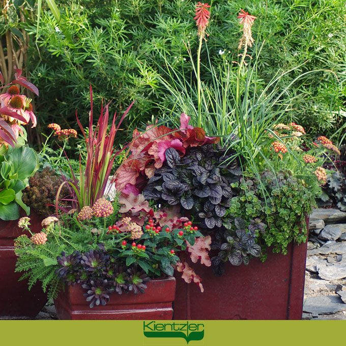pflanzung f r balkon und terrasse herbstzauber balkon blumen garten und herbst