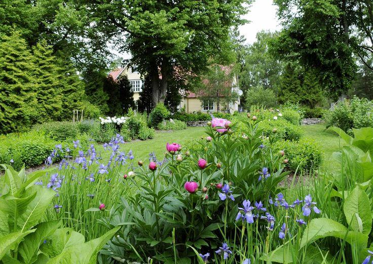 Pokrovan veljestön ainutlaatuisessa puutarhassa Kirkkonummella kukkivat taivaansiniset hortensiat, verenpisarat ja mooseksenpalavapensaat.
