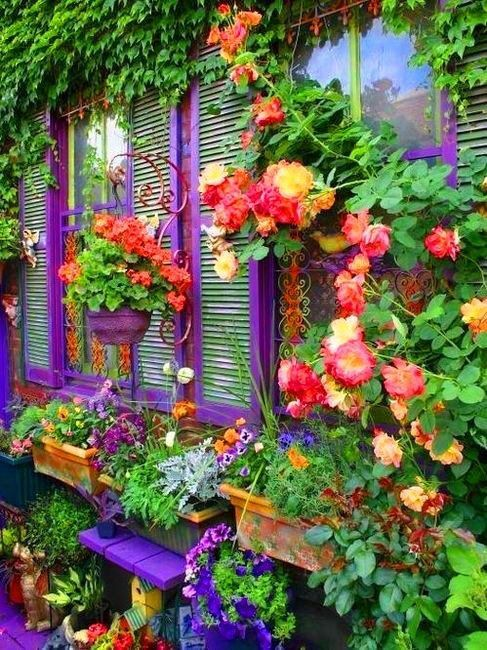 GorgeousCrafts Ideas, Outdoor Crafts, Windows Boxes, Climbing Rose, Beautiful, Gardens, House, Bright Colors, Flower