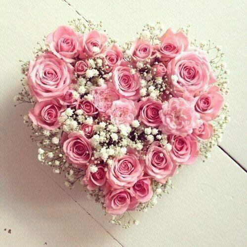 Resultado de imagem para pink roses