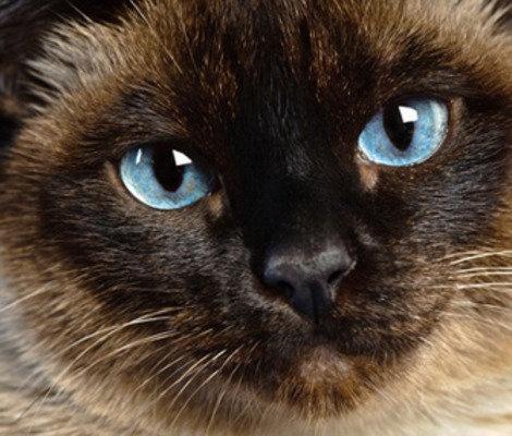 cat behavior & training