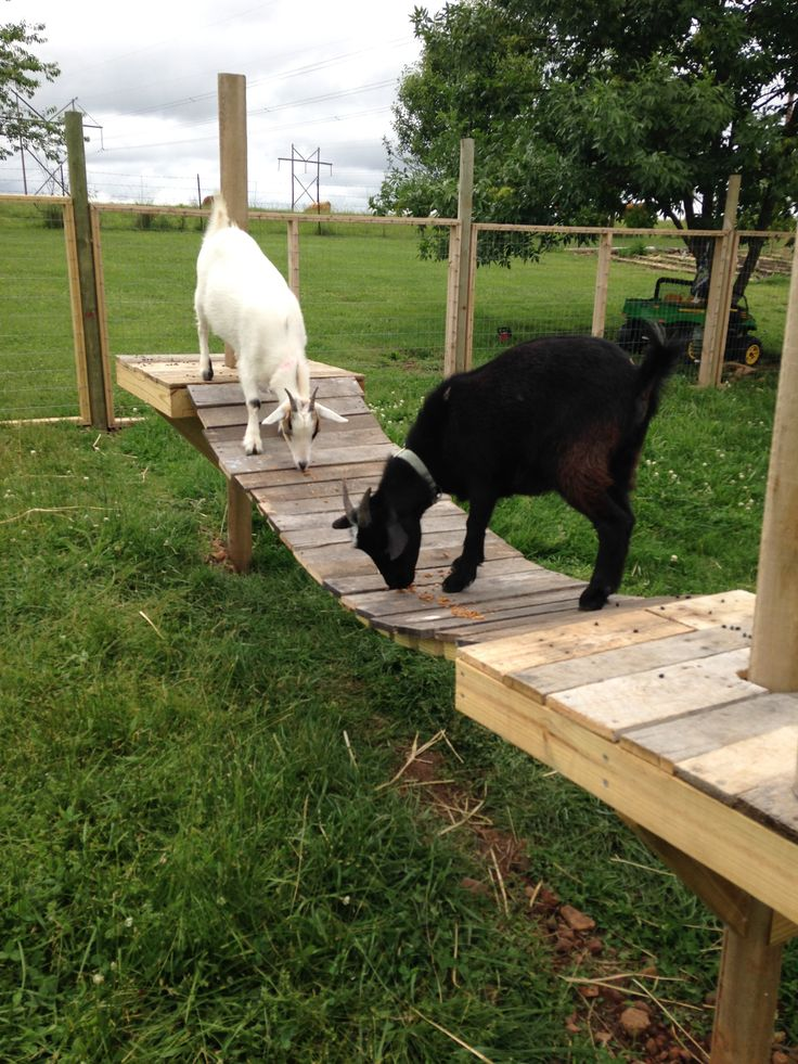 how to take care of fainting goats