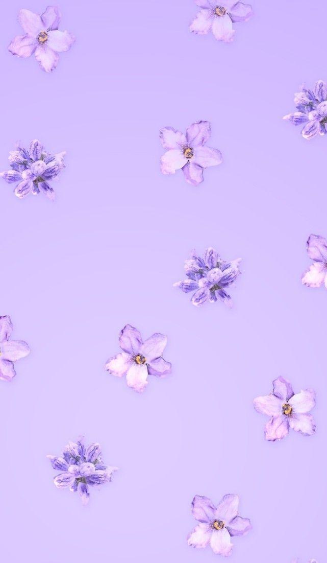 Lavender Aesthetic Flowers In 2020 Purple Wallpaper Iphone Light Purple Wallpaper Purple Wallpaper Phone