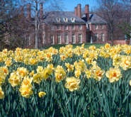 Kingwood Center, Mansfield Ohio-47-acre estate opened as a public garden: Hometown, Mansfield Ohio 47 Acre, Ohio Gardens, Famous Gardens, Daffodils, Beautiful Ohio, Kingwood Center, Bike Travels, Center Mansfield