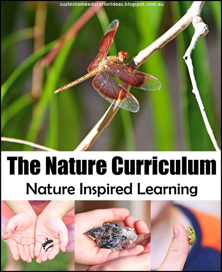 The Nature Curriculum - How nature can inspired learning, what subjects learning about nature covers and how to use the nature curriulum that is FREE to everyone