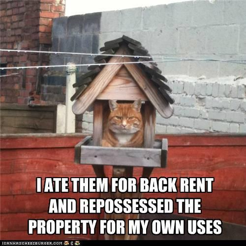 :-) #cats #funny #cute: Funny Cat Photo, Kitty Cat, Funny Pics, Funny Pictures, Real Estates, Funny Quotes, Funny Stuff, Cat House, Silly Cat