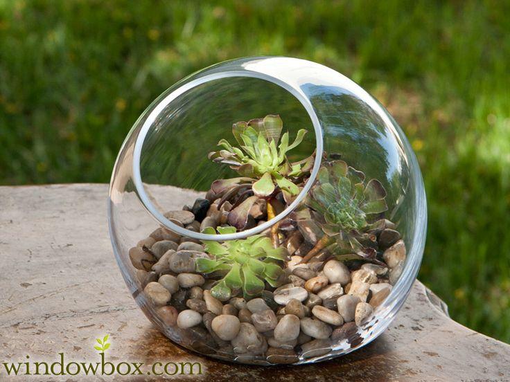 Bubble Glass Terrarium Container - 32 Best Terrarium Container Images On Pinterest Terrarium