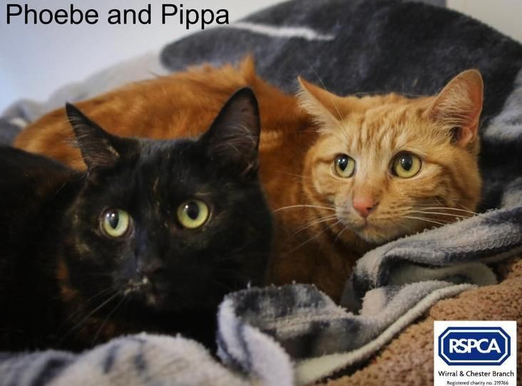 Image Of Pheobe And Pipper Cats Animals Rescue