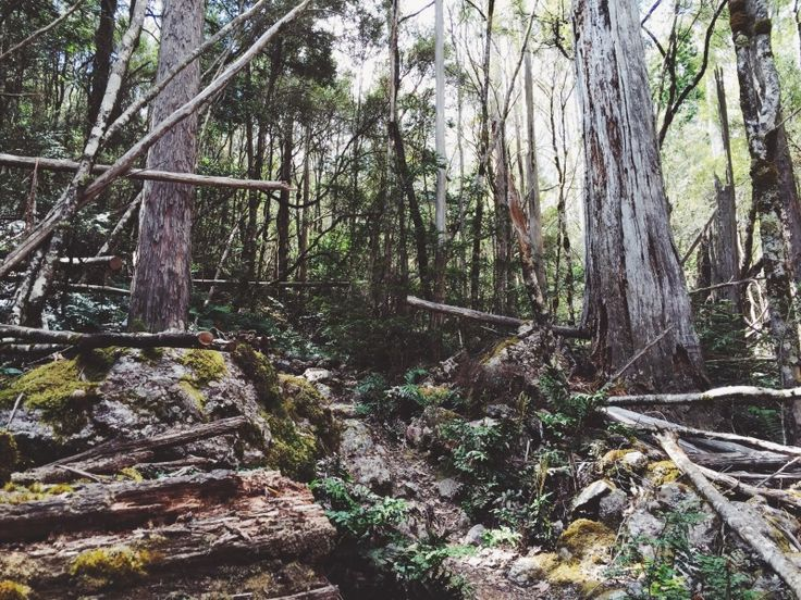Mt. Roland VI | Rosie. | VSCO Grid
