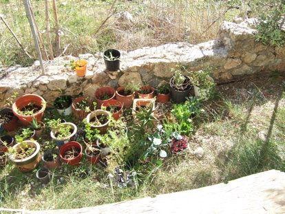 Cretan Cornucopia : Gardens and .......dogs!