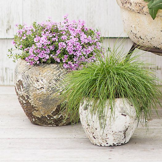 Barnacle Round Shoulder Pot in Garden Barnacle Collection at Terrain
