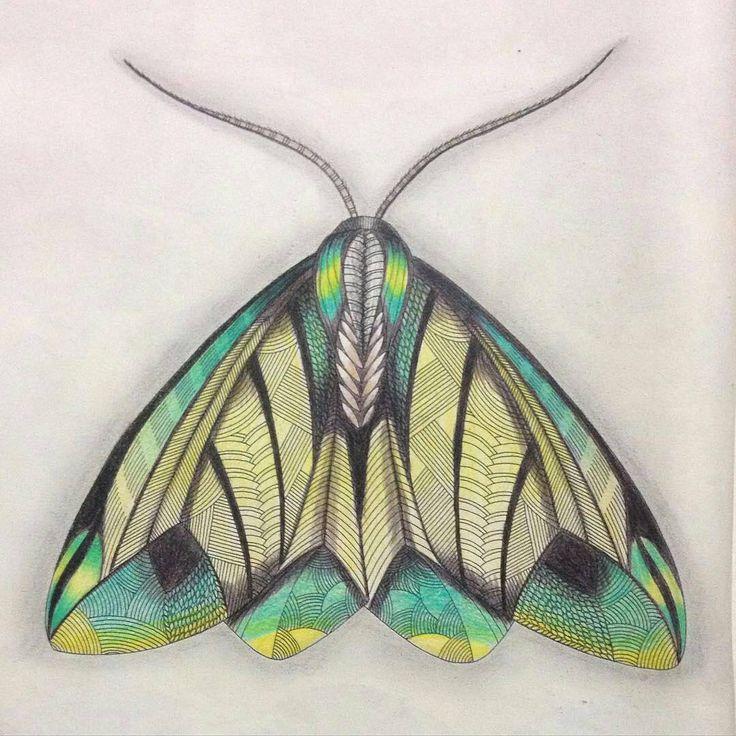 Colour Inspiration Animal Kingdom By Millie Marotta